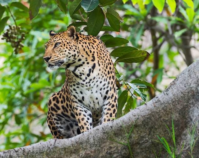 Sightseeing auf Sri Lanka